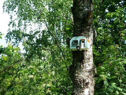 Ny fågelholk installerad på Lilla Tallbacken