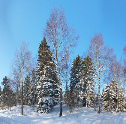 Vinter - februari 2010-02-21